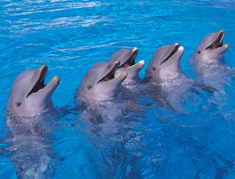 marineland-majorca-tickets